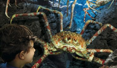 Sea Life Centre – Great Yarmouth